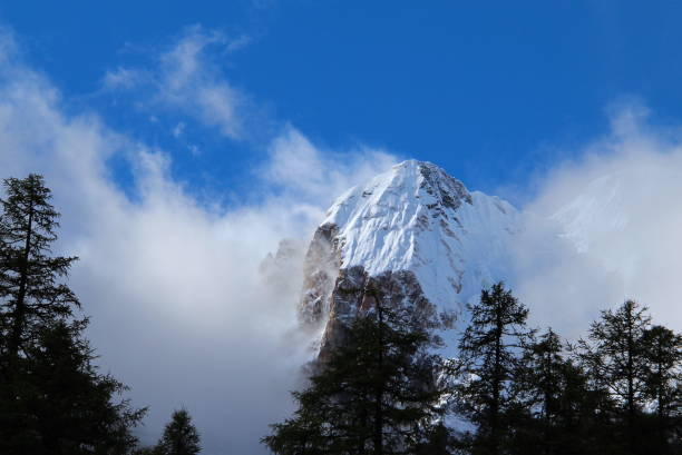 karlı dağ zirveleri mavi gökyüzü ve beyaz bulutlar ve çam ağaçları altında - ganzi tibet özerk bölgesi stok fotoğraflar ve resimler