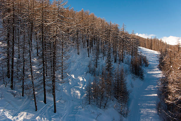 Snowy mountains and trees stock photo