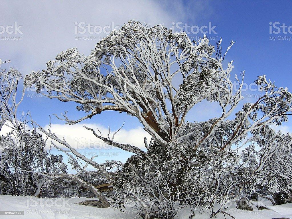 Snowy mountains, Australia royalty-free stock photo