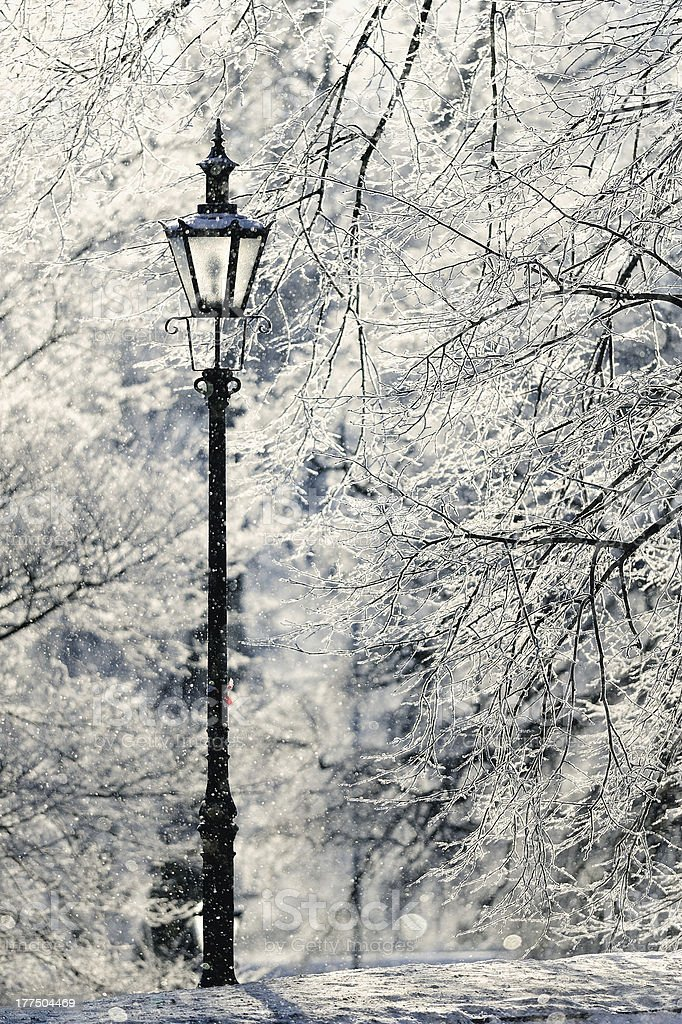 Snowy Park – Foto
