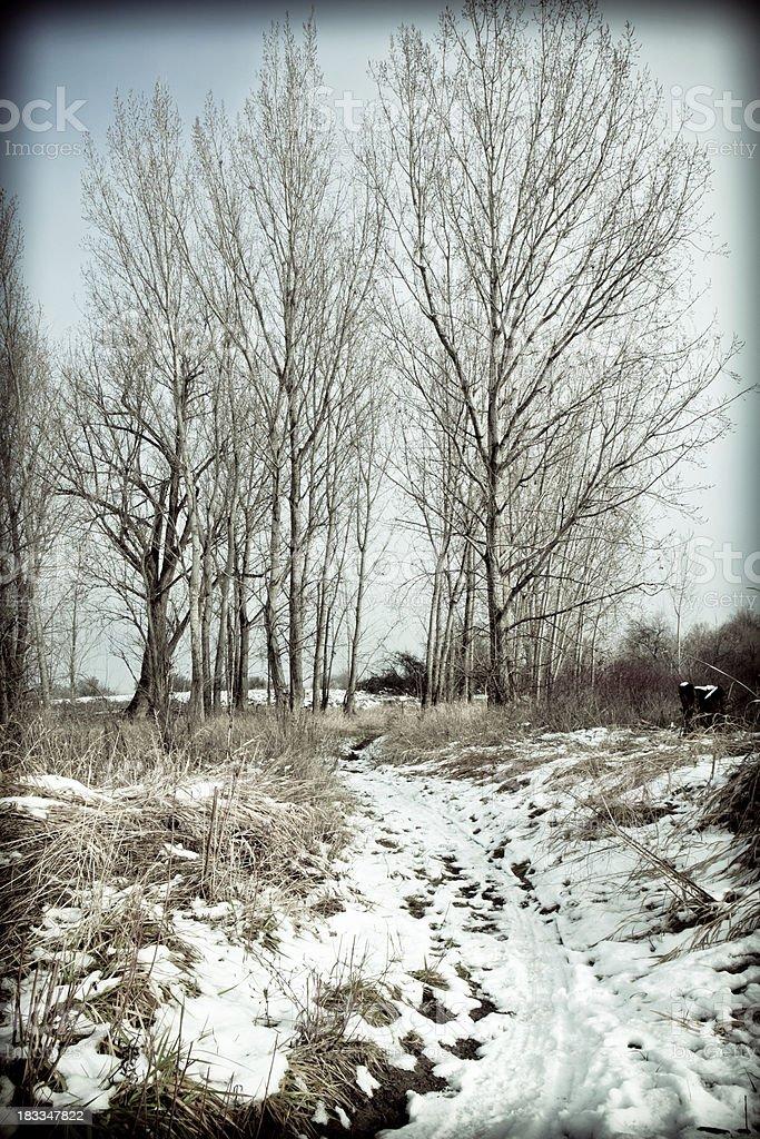 Snowy Path Leading Toward Trees stock photo