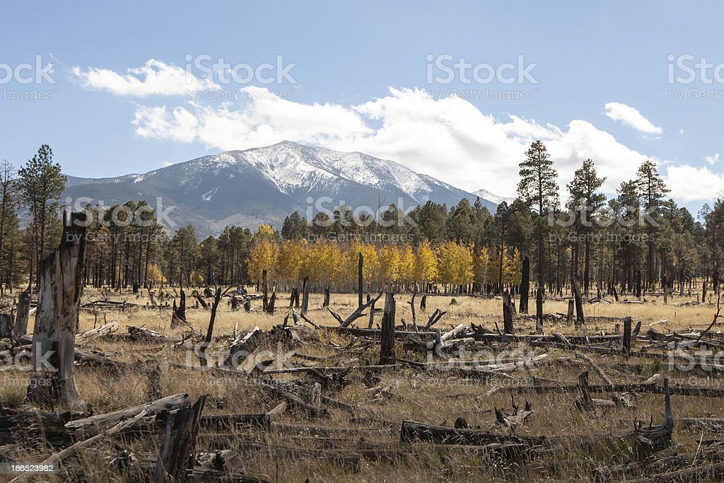 Snowy Peaks in Flagstaff royalty-free stock photo