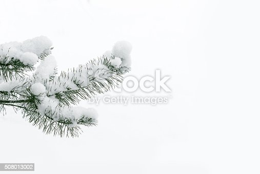 Christmas tree background. Tree branch, covered with snow on white background.