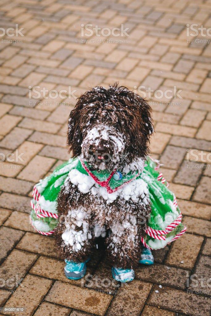 Snowy Puppy stock photo