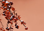 Red berries orange frame. Red berries in winter on an orange background with copy space for text