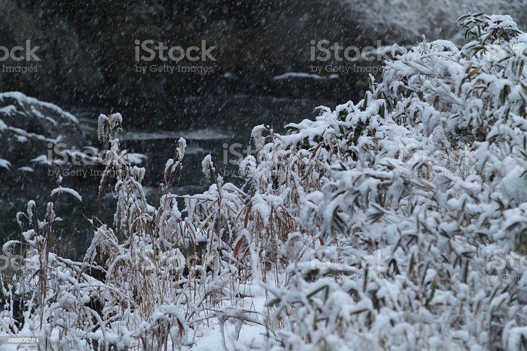 Snowy riverbank stock photo
