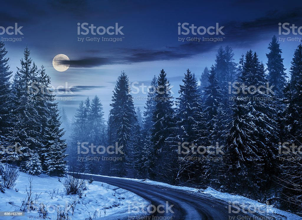 snowy road through spruce forest at night stock photo