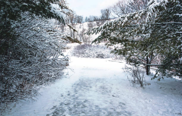 A Snowy Scene in a Toronto Park stock photo