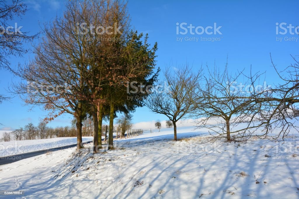 Snowy scenery with trees, street and blue sky stock photo