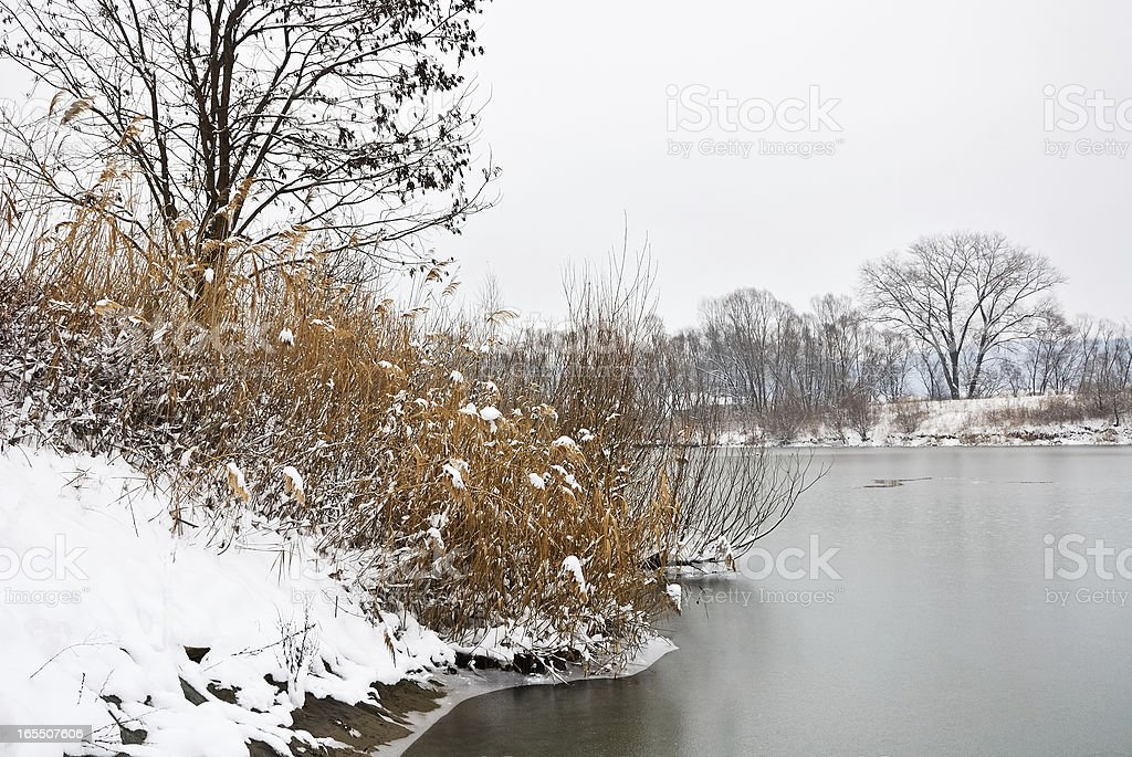 snowy shore at the lake royalty-free stock photo