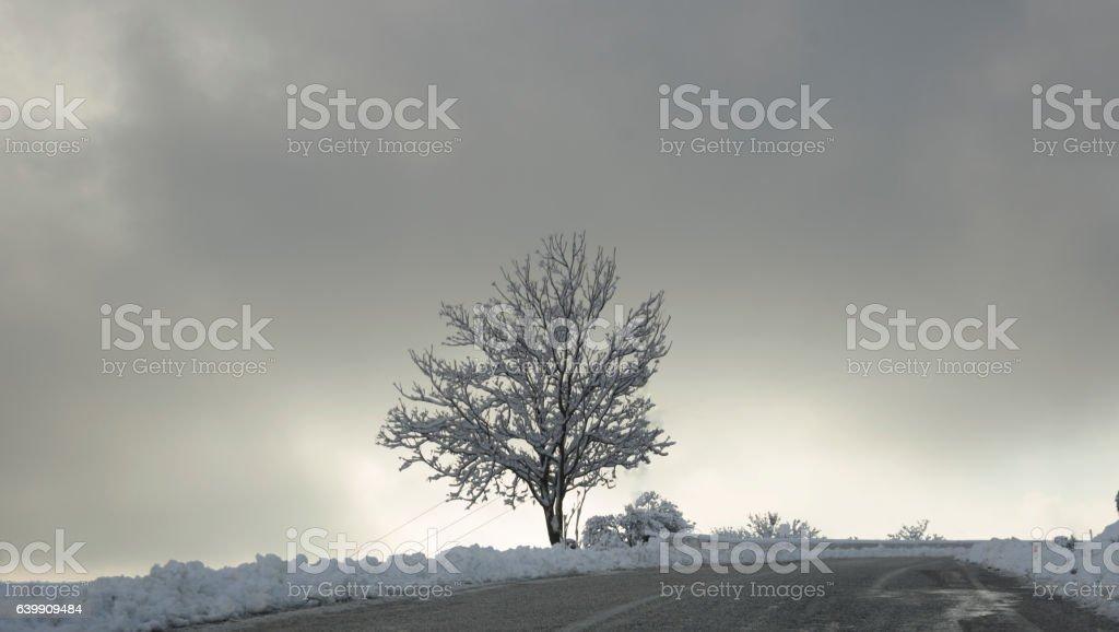 Snowy single tree stock photo