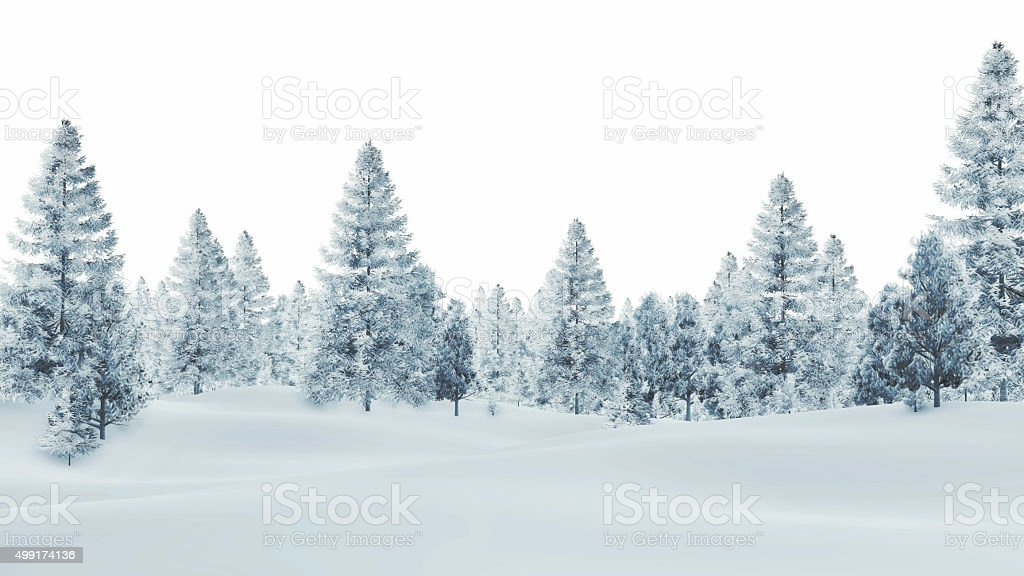 Snowy spruce forest on a white background stock photo