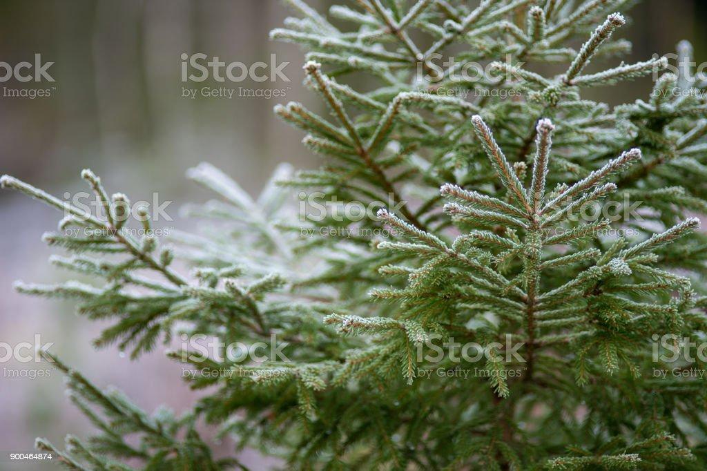 Snöiga Gran bildbanksfoto
