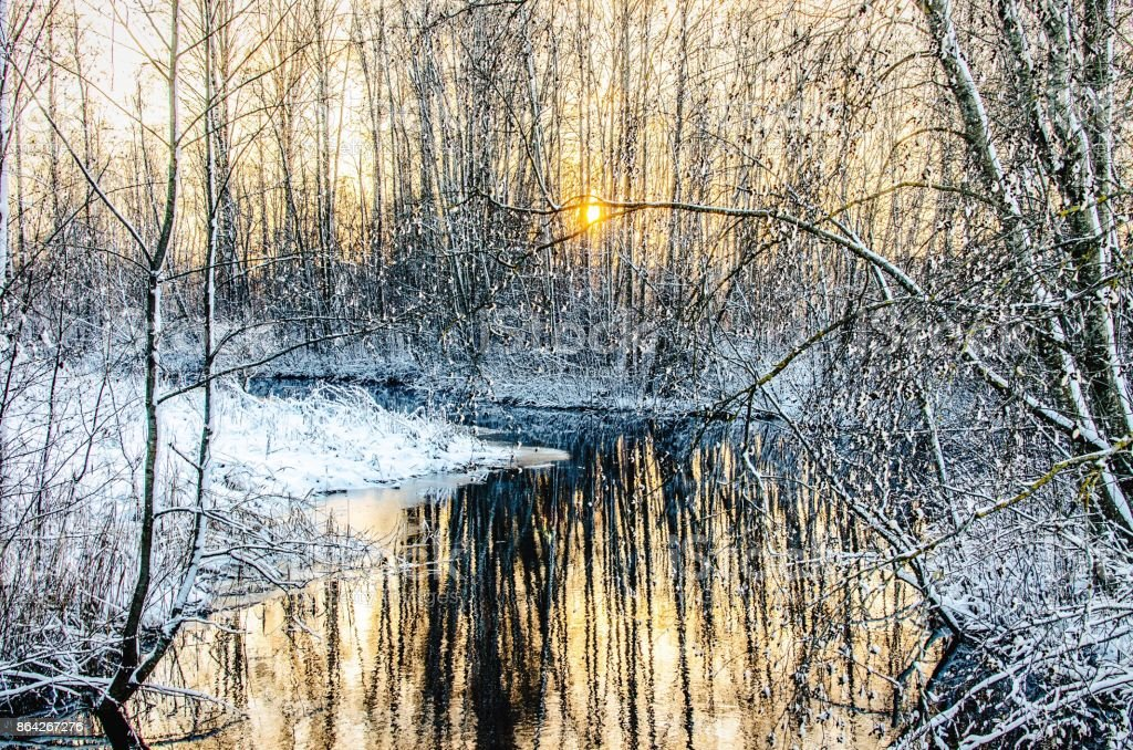 A snowy stream in the woods royalty-free stock photo