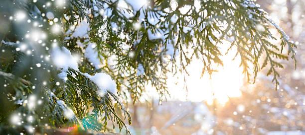 snowy tree branch at sunset - es schneit text stock-fotos und bilder