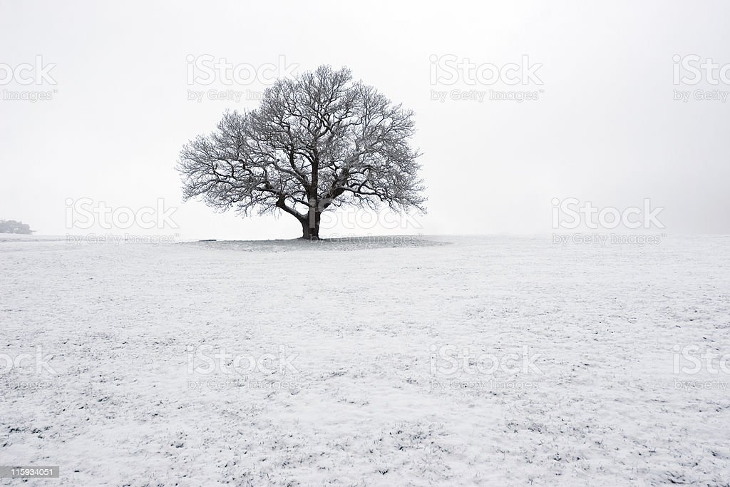 Snowy Tree In The Mist royalty-free stock photo