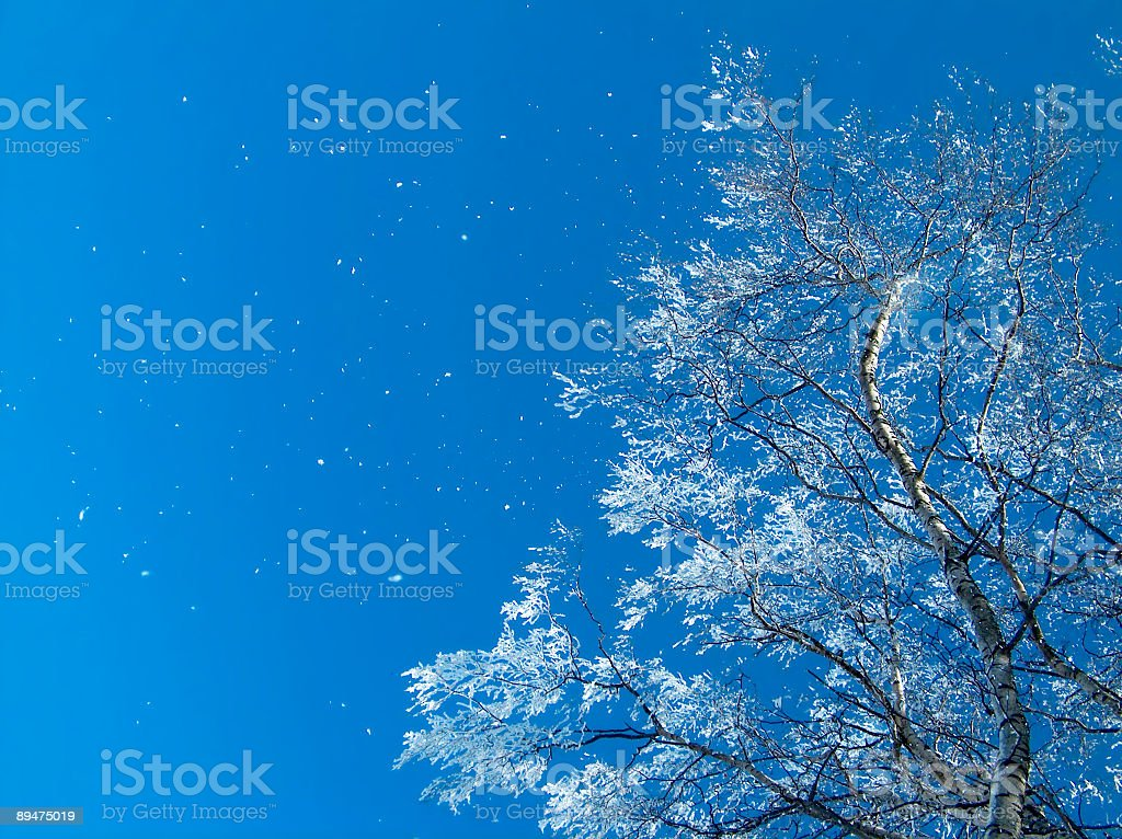 Schnee tree – Foto