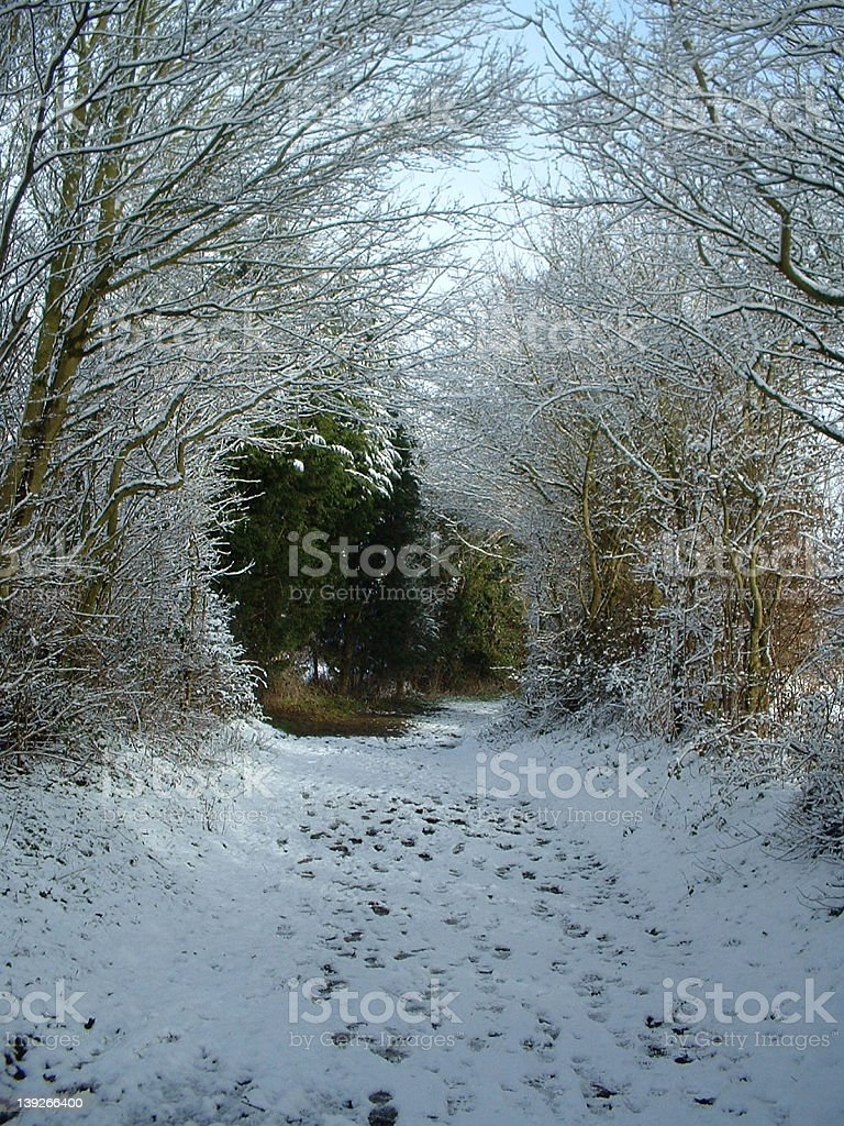 Snowy tree tunnel royalty-free stock photo