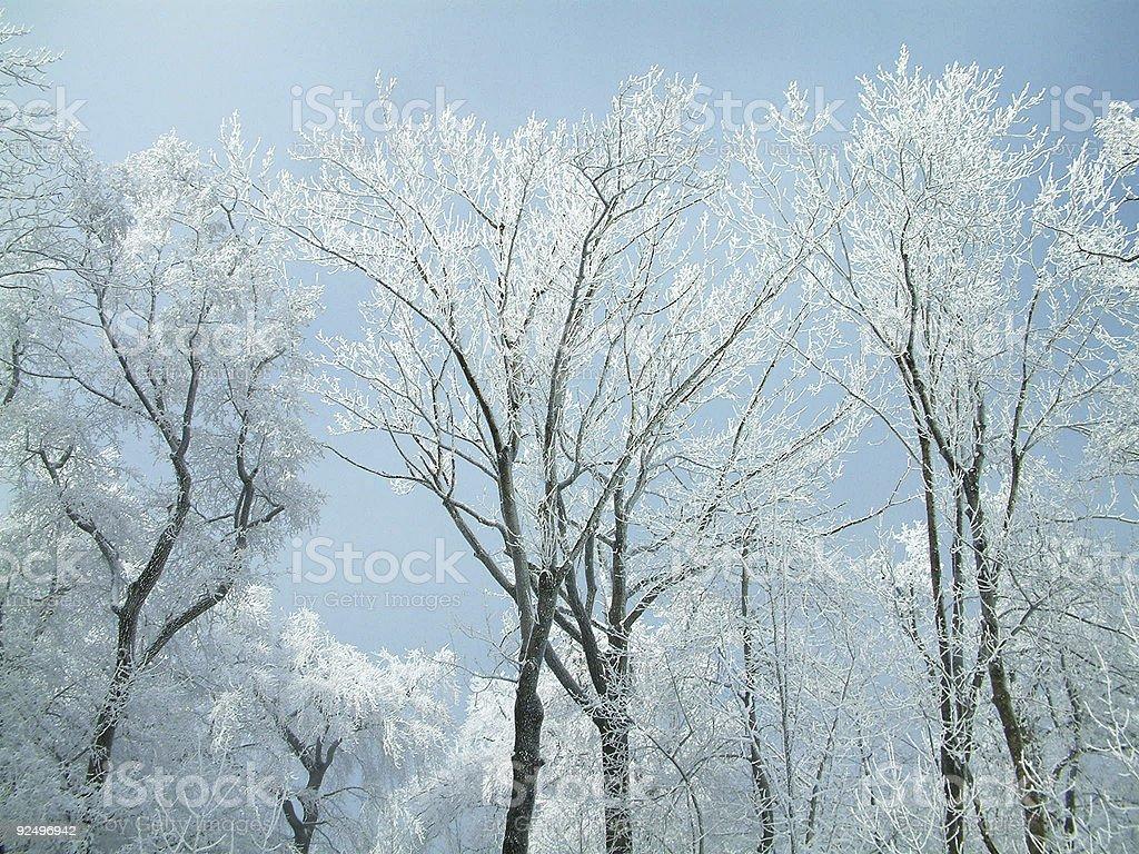 Snowy Trees 2 royalty-free stock photo