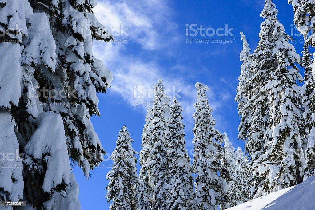 Snowy Trees royalty-free stock photo