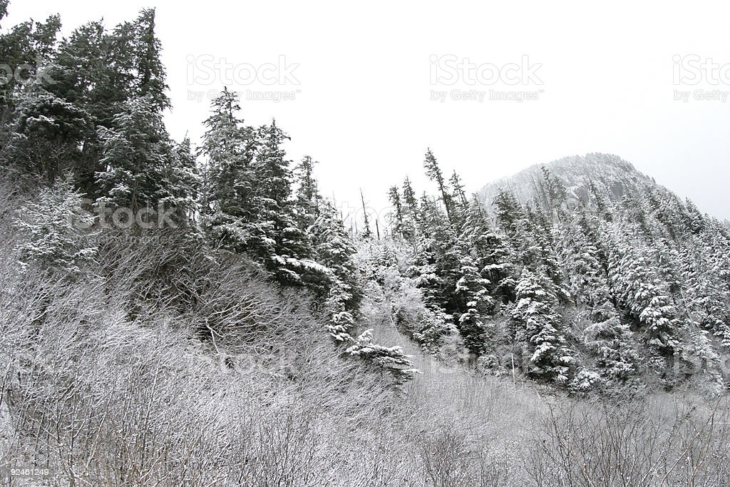Snowy trees stock photo