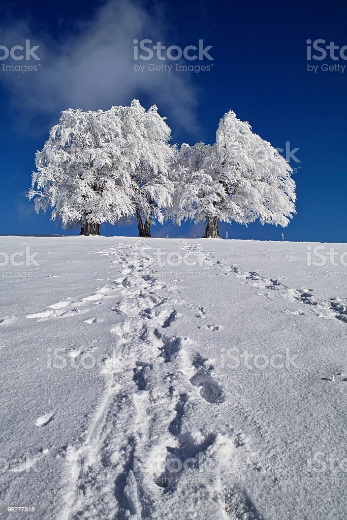 snowy trees with foot prints in the snow royalty-free stock photo