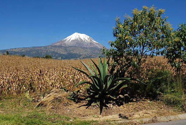 Snowy volcano corn and agave in the foreground The peak of Orizaba or Citlaltepetl is the highest mountain in Mexico to 5958 meters above sea level orizaba stock pictures, royalty-free photos & images