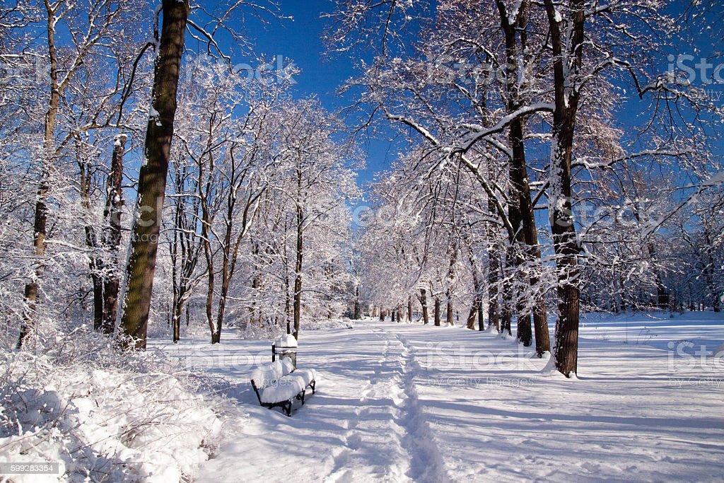 Snowy Warsaw park Łazienki in winter stock photo