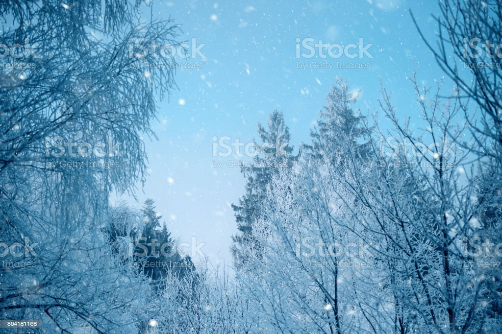 Snowy weather royalty-free stock photo