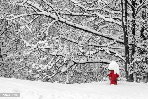 A black and white photography of fresh, winter snow covering the branches of a grove of trees and in the foreground is a red fire hydrant partially covered in snow, adding a uniqueness and charm to the photograph. The foreground is also covered in white snow.