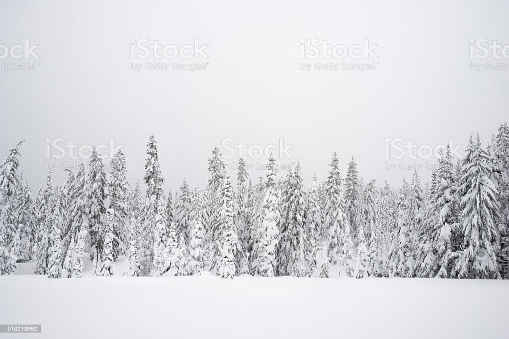 Snowy Wilderness - Royalty-free Adventure Stock Photo