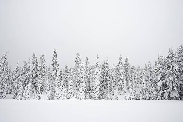 Snowy Wilderness stock photo