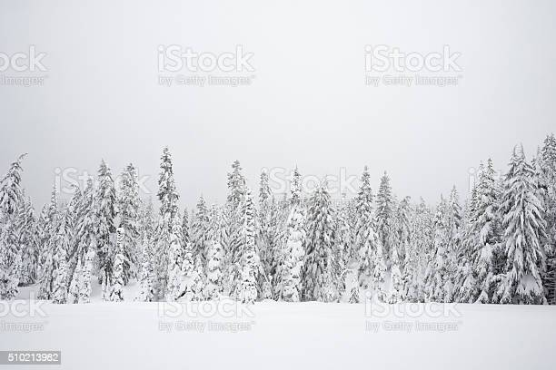 Snowy Wilderness Stock Photo - Download Image Now