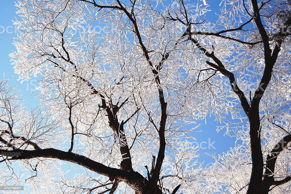 snowy willow tree (Germany) stock photo