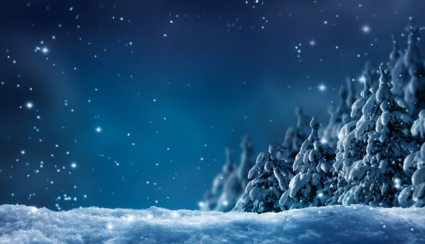 snowy winter forest by night snowy winter forest by night december stock pictures, royalty-free photos & images