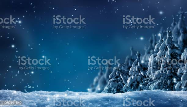 Photo of snowy winter forest by night