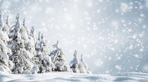 snörik vinter skog landskap bakgrund - snötäckt bildbanksfoton och bilder