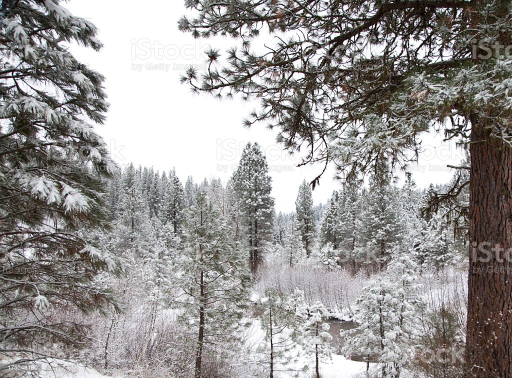 Snowy Winter Forest royalty-free stock photo