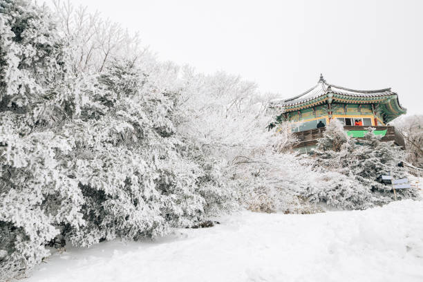 Snowy winter Hallasan mountain 1100 highland in Jeju Island, Korea Snowy winter Hallasan mountain 1100 highland in Jeju Island, Korea seogwipo stock pictures, royalty-free photos & images
