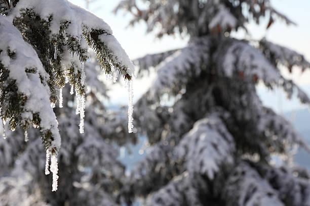 Schnee winter landsacpe mit iceicle und Douglasien. – Foto