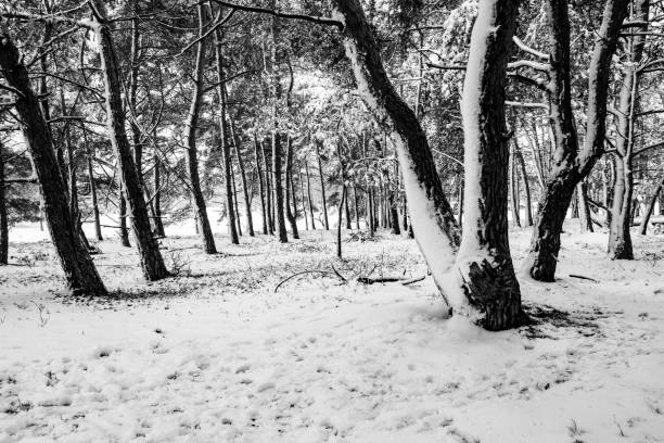 Snowy winter landscape during a cold winter day with fresh snowfall stock photo