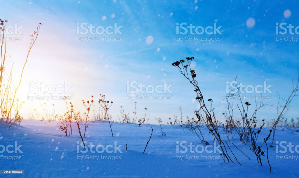snowy winter landscape; frozen field; ice and snow royalty-free stock photo