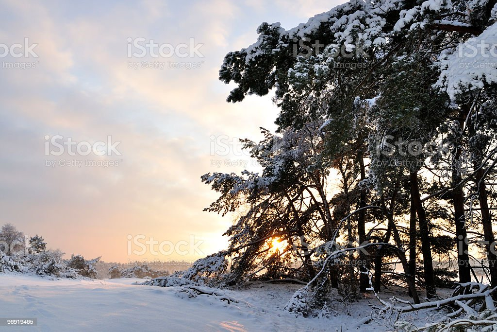 Snowy winter landscape royalty-free stock photo