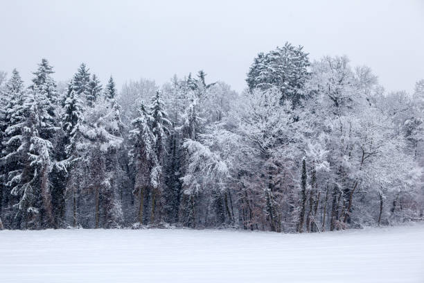Snowy Winter Landscape. Seasonal Photography. stock photo