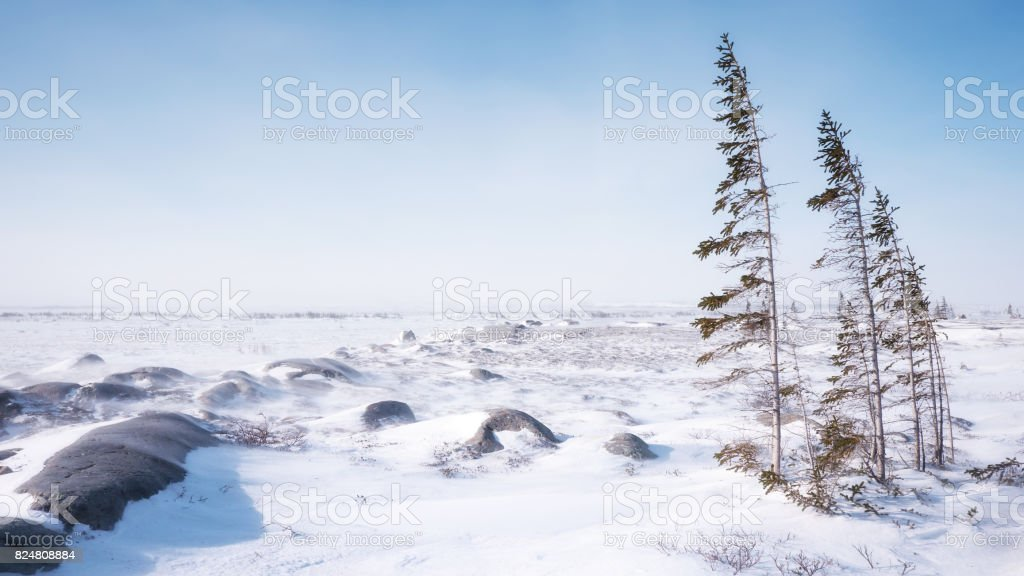 Snowy winter landscape where tundra and boreal forest ecosystems meet. Churchill, Manitoba. stock photo