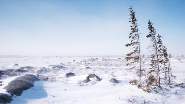 雪冬の風景は、ツンドラと北方森林生態系が出会う場所。マニトバ州のチャーチル。 - ツンドラ ストックフォトと画像