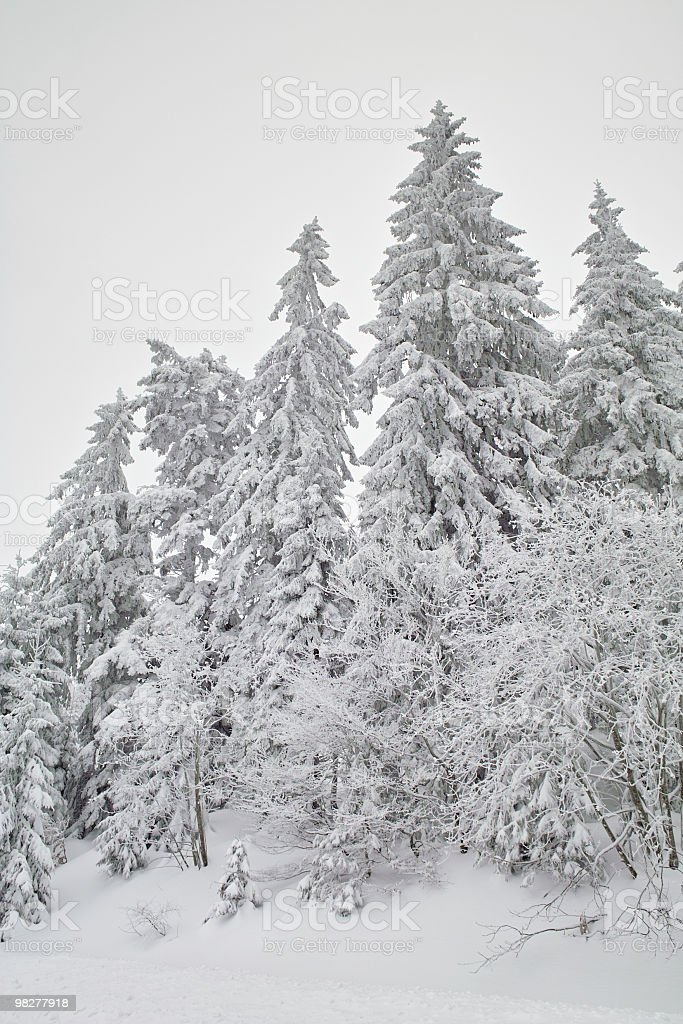 snowy winter landscape with fir and fog royalty-free stock photo