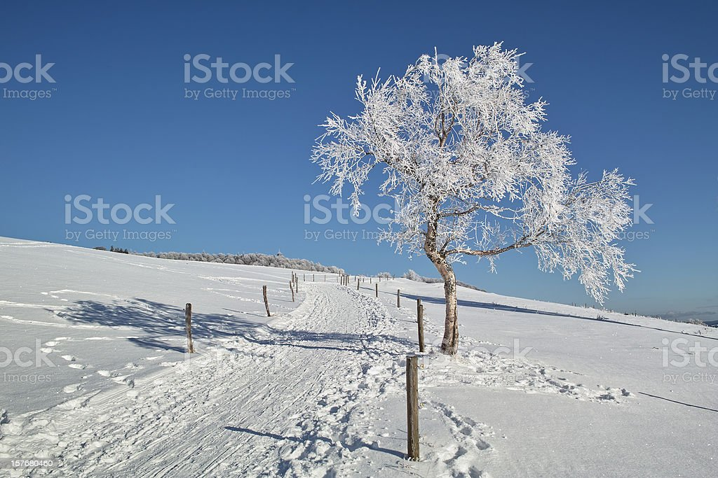 snowy winter landscape with trail in Black Forest royalty-free stock photo