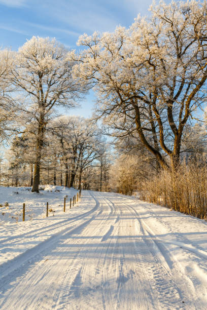Snowy winter road through an oak woods stock photo