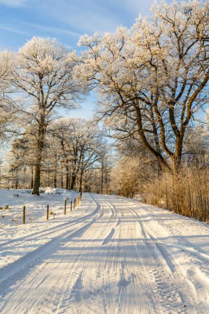 Estrada de inverno nevado por meio de um bosque de carvalho - foto de acervo